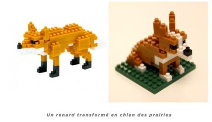 renard:chien